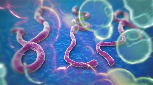 Dịch Ebola và vấn đề vệ sinh an toàn thực phẩm