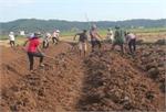 Sản xuất nông nghiệp ở Bắc Giang: Đổi công, tăng hiệu quả