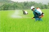 Giảm thiểu nguy cơ ô nhiễm do thuốc bảo vệ thực vật