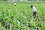 Hiệp Hòa:  Hỗ trợ xây dựng cánh đồng cho thu nhập cao