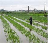 Tích cực chăm sóc  cây trồng sau bão