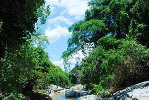 Cần xác định dịch vụ môi trường rừng là nguồn thu phí, thuế của Nhà nước