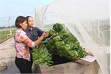 Cơ hội mới cho nông sản  Bắc Giang