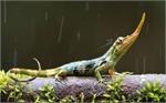 Thả hơn 300 cá thể động vật hoang dã về môi trường tự nhiên