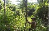 Ngăn chặn khai thác gỗ lim non tại Sơn Động