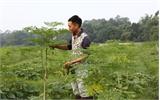 Chùm ngây - cây trồng mới