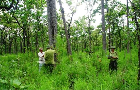 Bắc Giang: Chủ động tháo gỡ khó khăn, phát triển và bảo vệ rừng nghiêm ngặt