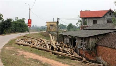TP Bắc Giang: Ngăn chặn vi phạm đê điều