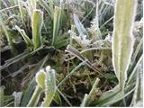 Thêm không khí lạnh tăng cường, miền Bắc còn rét đậm rét hại