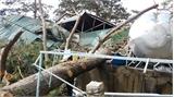 Lâm Đồng: Cây thông cổ thụ bất ngờ đổ sập xuống căng tin bệnh viện, 4 người chấn thương nặng