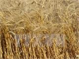 Nga bắt đầu nhập khẩu các lô sản phẩm lương thực từ Iran