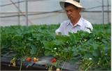 Nhân rộng mô hình ứng dụng công nghệ cao vào nông nghiệp