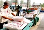 Xuất khẩu 312 ngàn tấn gạo trong tháng đầu năm 2015