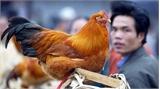 Lo ngại dịch cúm A(H7N9) vào Việt Nam