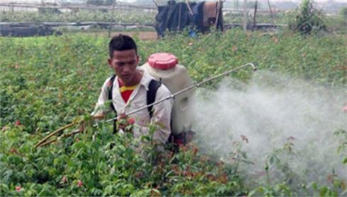 Còn nhiều lãng phí trong sử dụng thuốc bảo vệ thực vật