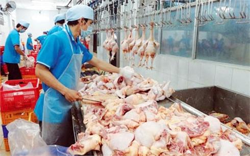 Yên Thế: Tiêu thụ gần 780 nghìn con gà dịp Tết