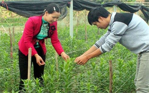 'Kích cầu' xây dựng  nông thôn mới ở Việt Yên
