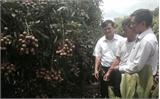 Lục Nam xây dựng qui hoạch 497 ha sản xuất rau, quả theo tiêu chuẩn VietGAP