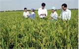 Nâng cao lợi ích, trách nhiệm của nông dân và  doanh nghiệp