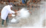 WHO cảnh báo sự thay đổi nguy hiểm của các chủng virus cúm