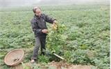 Nhiều giải pháp  giảm nghèo bền vững ở Yên Thế