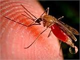 Việt Nam cam kết không còn bệnh sốt rét vào năm 2030