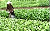 Hỗ trợ hơn 5 nghìn hộ nghèo sản xuất nông nghiệp