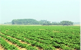 Yên Dũng: Hỗ trợ 3 xã đăng ký về đích nông thôn mới