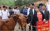 Tặng 40 con bò cho hộ nghèo huyện Sơn Động