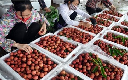 Bộ Khoa học và Công nghệ: Hỗ trợ công nghệ bảo quản nông sản xuất khẩu