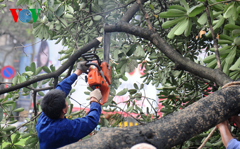 Thủ tướng yêu cầu TP Hà Nội xử lý nghiêm vụ chặt hạ cây xanh