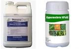 5 hoạt chất cấm sử dụng khi chăm sóc vải thiều