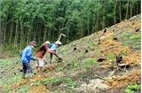 Ưu tiên bố trí vốn cho công tác khoán bảo vệ rừng