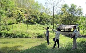Quản lý đất tại các công ty lâm nghiệp: Rà soát lại hiện trạng sử dụng