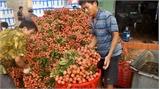 TP.Hồ Chí Minh kết nối hỗ trợ tiêu thụ vải thiều