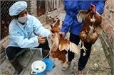 Phát hiện ổ dịch cúm A (H5N1) tại hộ gia đình