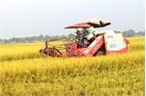 Bắc Giang: Năng suất lúa chiêm xuân ước đạt 58 tạ/ha