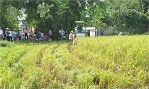 Máy gặt về làng