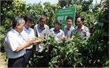 Các nhà khoa học nông nghiệp Hàn Quốc thăm vùng vải thiều Phúc Hòa