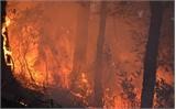 Công điện khẩn phòng cháy, chữa cháy rừng
