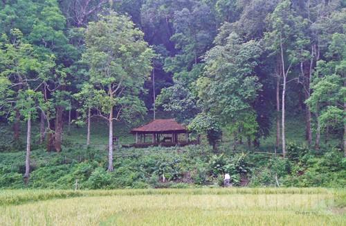 Về bản Đá Húc, thăm rừng lim xanh, Bình Sơn, Lục Nam