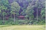Về bản Đá Húc thăm rừng lim xanh