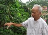 Người cao tuổi huyện Hiệp Hòa: Làm giàu trên quê hương