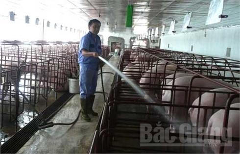 Bắc Giang: Chống nóng bảo vệ vật nuôi, cây trồng