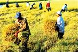 Nông nghiệp đang 'kìm' đà tăng trưởng kinh tế