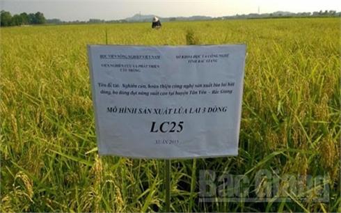 Bắc Giang: Tạo bước đột phá về năng suất, chất lượng nông sản