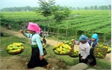 Bắc Giang: Hỗ trợ sản xuất cho hơn 760 hộ nghèo miền núi