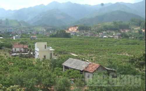 Những vườn na tại thôn Khuyên, xã Huyền Sơn.