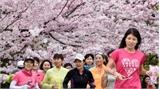 Du khách Việt sang Nhật tăng mạnh