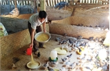 Lắp đặt lưới xua diệt côn trùng